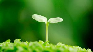 Колористика. Зеленый цвет