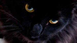 Колористика. Черный цвет