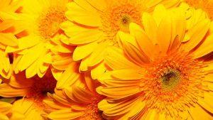 Колористика. Желтый цвет