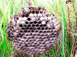 Изобрести бумагу помогли осы