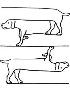 Обман зрения или оптические иллюзии. невозможные животные